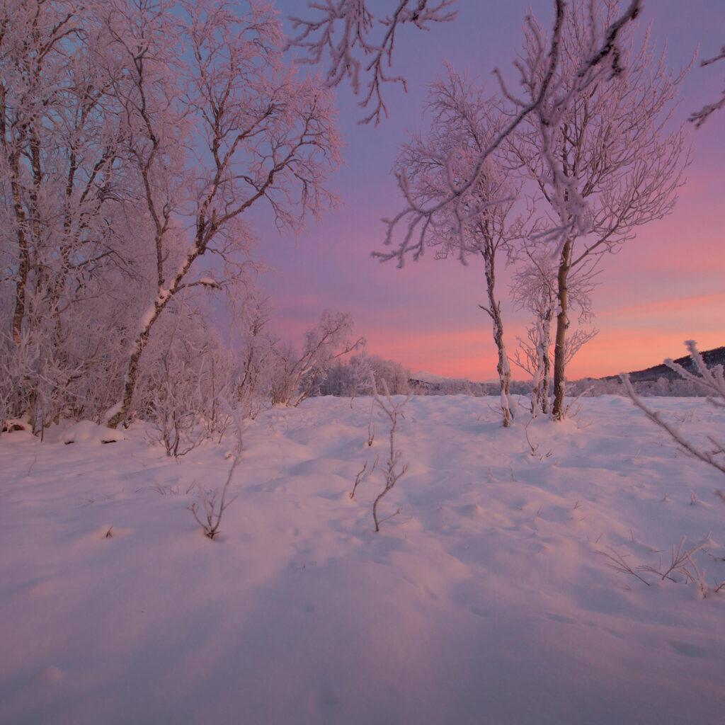 The return of polar nights over Senja