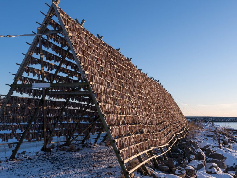 Norwegian traditional stockfish outdoor drying, Lofoten - Norway